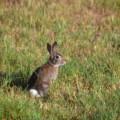 Photos: Peter Rabbit 5-27-21