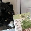 Photos: Wheat-Grass 6-11-21