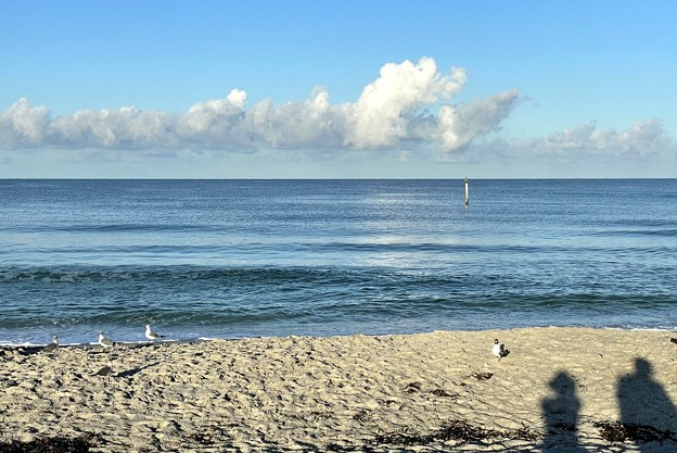 Laughing Gulls and Us 8-8-21