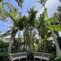Photos: Travelers Palms 8-30-21