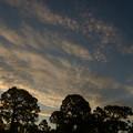 Photos: フロリダのあちこちでいわし雲が見られた日。