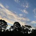 Photos: フロリダのあちこちでイワシ雲が見えた日。