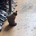 Shop Cat 9-16-21