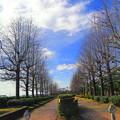 Photos: 冬木立