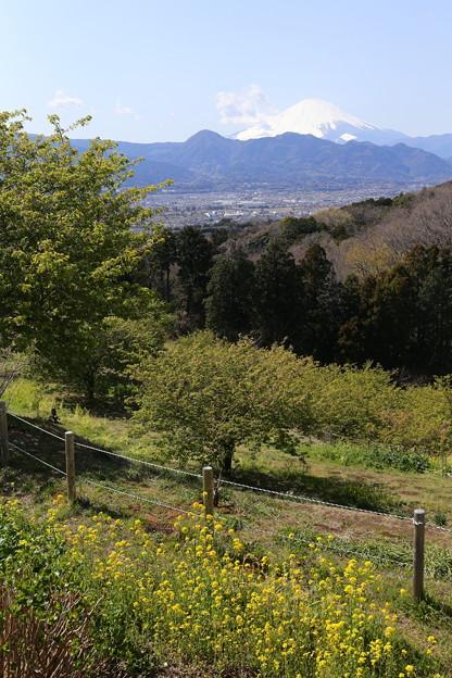 富士山 おおいゆめの里から