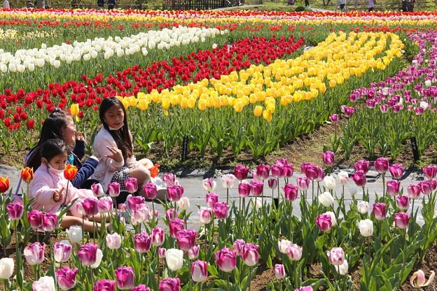 チューリップ in 戸川公園