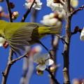 Photos: 春の香りに誘われて