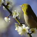 Photos: 春はどんな匂い?