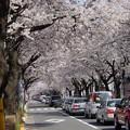 Photos: 桜のかほり