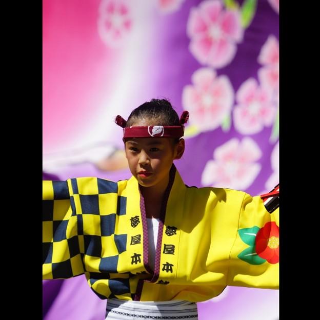 Photos: 花と少女