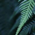 Photos: leaf
