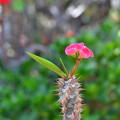 Photos: 可愛いお花♪