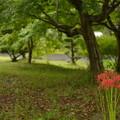 Photos: 小さな花園