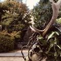 Photos: 鹿のアート