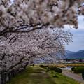 Photos: 2021.03.24_007