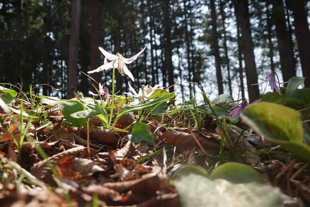 和かな春の陽射しを受けて・・・