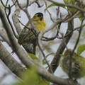 Photos: 行く鳥