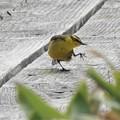 Photos: メグマ湿原