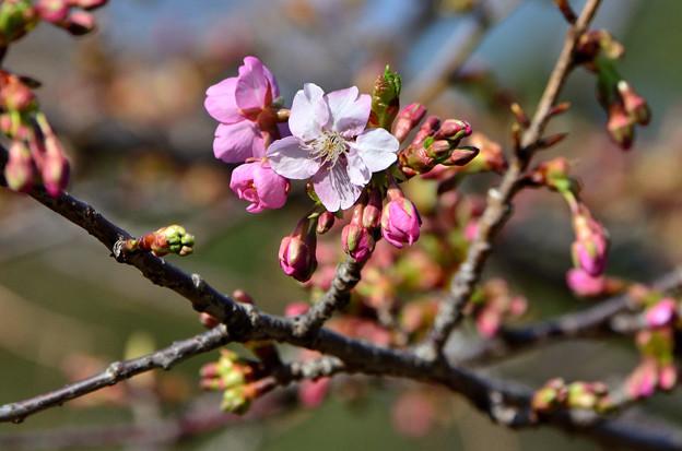 2021_0221_144218 開花