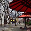Photos: 2021_0228_134828 祇園白川