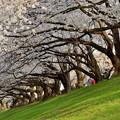 2021_0327_170202 桜の軒下