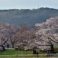 2021_0327_172343 桜と天王山