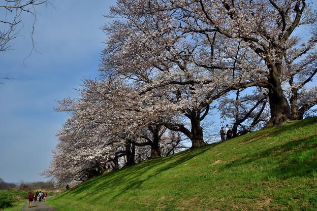 2021_0327_161627 桜並木