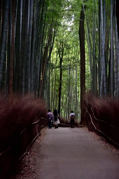 2021_1011_151601 竹林の小径
