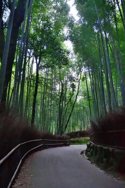 2021_1011_151827 竹林の小径
