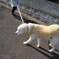 Photos: 散歩