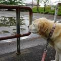 Photos: 一人散歩