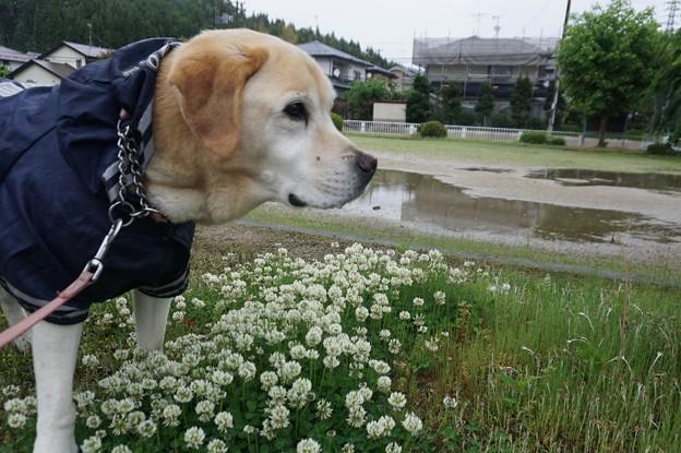 雨でも散歩