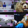 Photos: 献血犬のニュース