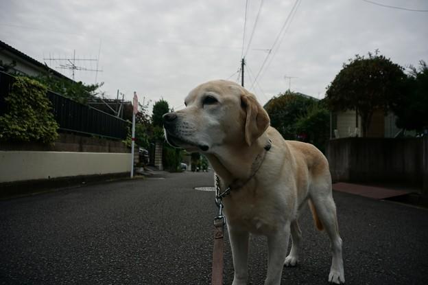 Photos: 朝散歩