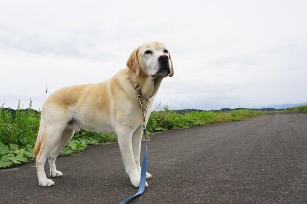 ひとりの散歩