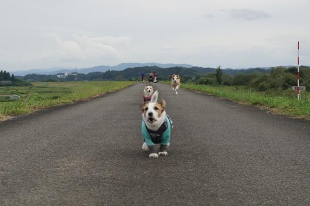 Photos: にぎやか