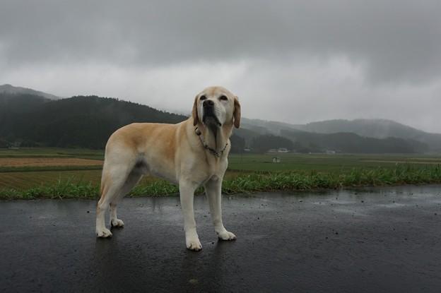 雨降り散歩
