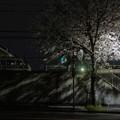 Photos: 夜桜 #1