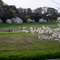 Photos: 桜 #2