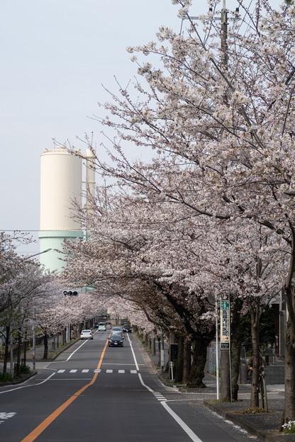 Photos: 桜 #4