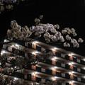 Photos: 夜桜 #4