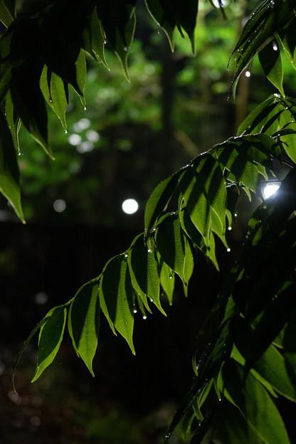 雨に降られた夜