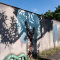 Photos: 重なる木