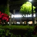 花と駅 その1