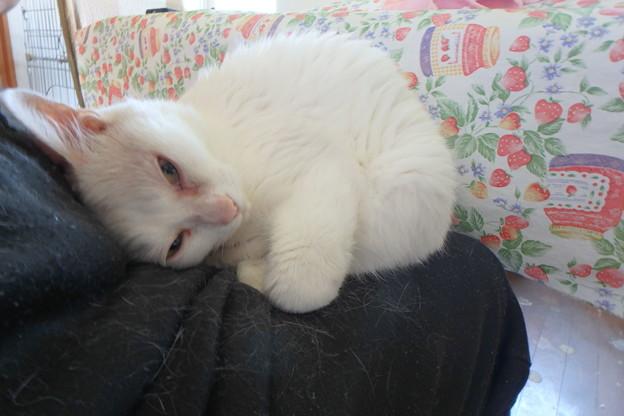 Photos: 甘えん坊のヤンチャ猫