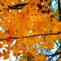 Photos: 人里離れた公園の紅葉