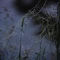 Photos: クモの巣