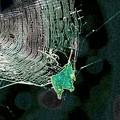 Photos: 蜘蛛の巣