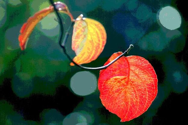 葉も色ずく-1
