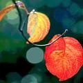 Photos: 葉も色ずく-1